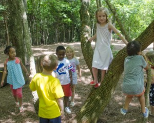 Preschool play in the forest